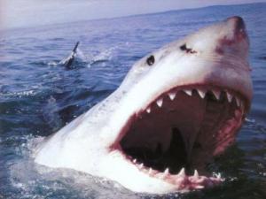 tiburons