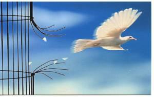 paloma-en-libertad